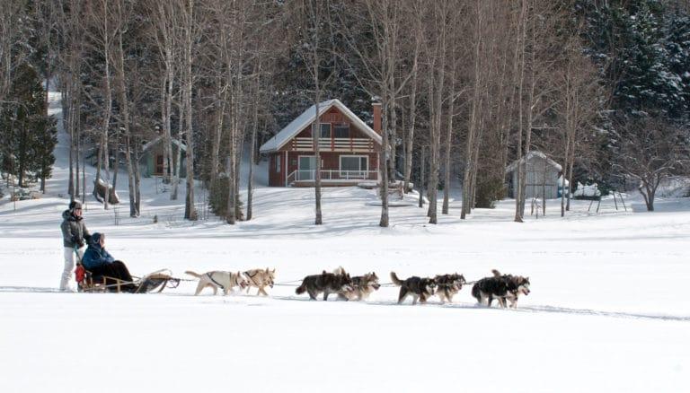 traineau chien lac